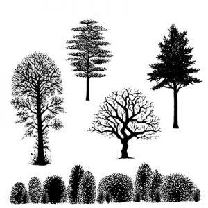 """Прозрачни печати """"Tree Scene"""", Lavinia Stamps"""