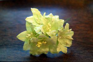 Лилиуми, бледозелени, 5бр., 35мм