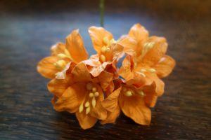 Лилиуми, цвят праскова, 5бр., 35мм