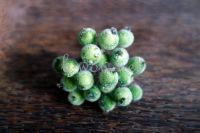 Заскрежени плодчета, маслинено-зелени, 20бр., 12мм