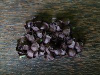 Къдрави рози, кафяви, 35мм