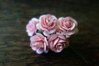 Рози, корал, 20мм