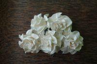 Къдрави рози, слонова кост, 35мм