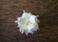 Гардения, лилаво-бяла, 35мм