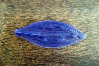 """Молд """"Листо на дендробиум"""", 15.5см х 6см"""