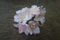 Лилиуми, розово-бели. 5бр., 35 мм