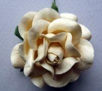 Кремава роза, 50 мм
