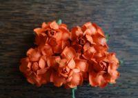 Къдрави рози, корал, 35мм