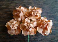 Къдрави рози, праскова, 35мм
