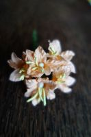 Мини-лилиуми, цвят праскова, 5бр., 25мм