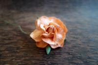 Къдрава роза, праскова, 45мм