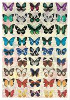 """Декупажна хартия """"Дъга от пеперуди"""", DGE171, 35см х 50см"""